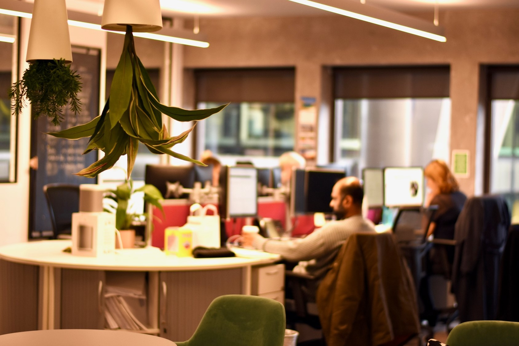 Warm lighting in InterQuest Group's office upside-down plants round desks